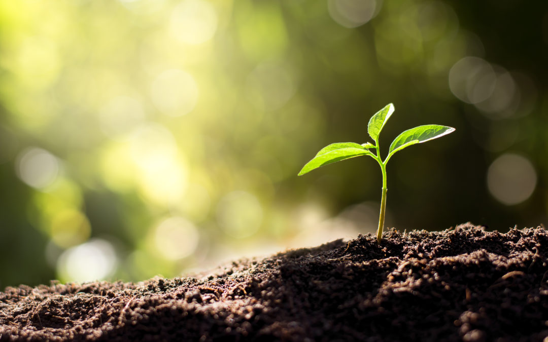Do not despise the small beginnings